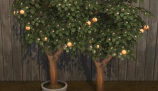 Мод для Симс 4: грейпфрут